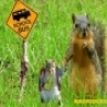 Funny Pictures - Squirrel Going To School