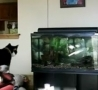 Funny Links - Cat Crash Tests the Aquarium