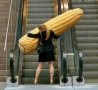 Funny Pictures - Funny Pictures-Corn
