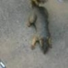 Funny Links - Squirrel Playing Dead