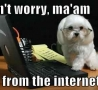 Funny Animals - Geeky Dog