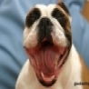 Cool Links -  Puppy Laughing At You