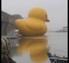 Funny Pictures - Giant Rubber Ducky