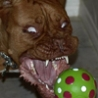 Cool Links - Possessed Pooch