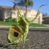 Funny Animals - Dancing Mantis
