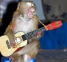 Funny Animals - Monkey Guitar Hero