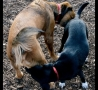 Funny Animals - New Doggie Style