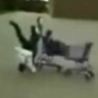 Funny Links - Shopping Cart Head On Collision