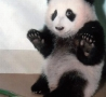 Funny Animals - Panda Scared