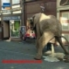 Funny Pictures - Funny Elephant Diarrhea