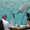 Cool Pictures - Underwater Restaurants