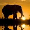 Cool Pictures - Africas Best Pictures