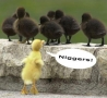 Funny Animals - Racist Chick