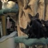 Funny Links - Dancing Kitties