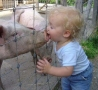 Funny Pictures - Smooching The Pig