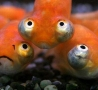 Funny Pictures - Stupid Fish Face