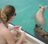 Cool Pictures - Swimming Pigs