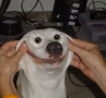 Funny Links - Teaching A Dog To Smile
