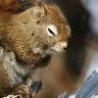 Funny Animals - Squirrel Snoozing