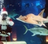 Christmas Pictures - Underwater Santa