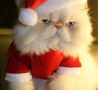Christmas Pictures - Unhappy Santa Claws