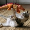 Funny Links - Cute Cat Attack