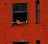 Funny Links - Window Sun Bathing