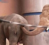Funny Animals - You're Doing It Wrong - Elephant