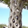 Weird Funny Pictures - Strange Trees