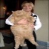 Funny Animals - Worlds Fattest Cat